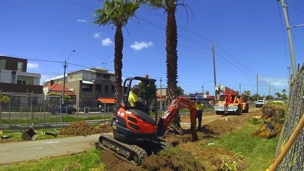 Palm Tree Removal-Weston FL Tree Trimming and Stump Grinding Services-We Offer Tree Trimming Services, Tree Removal, Tree Pruning, Tree Cutting, Residential and Commercial Tree Trimming Services, Storm Damage, Emergency Tree Removal, Land Clearing, Tree Companies, Tree Care Service, Stump Grinding, and we're the Best Tree Trimming Company Near You Guaranteed!
