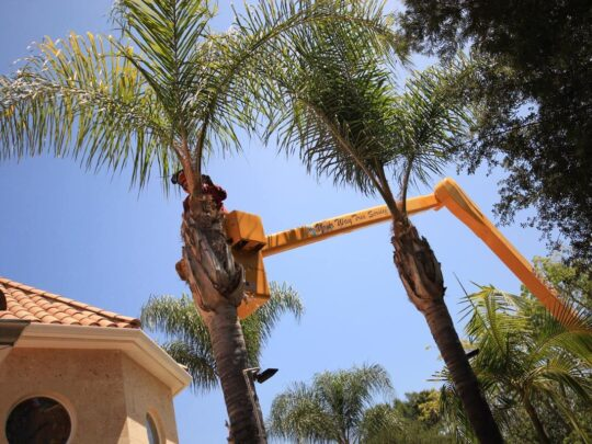 Palm Tree Trimming-Weston FL Tree Trimming and Stump Grinding Services-We Offer Tree Trimming Services, Tree Removal, Tree Pruning, Tree Cutting, Residential and Commercial Tree Trimming Services, Storm Damage, Emergency Tree Removal, Land Clearing, Tree Companies, Tree Care Service, Stump Grinding, and we're the Best Tree Trimming Company Near You Guaranteed!