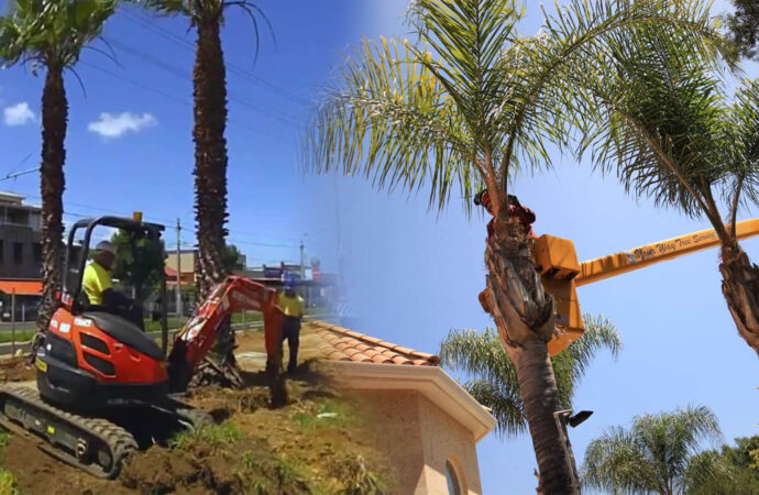 Palm tree trimming & palm tree removal-Weston FL Tree Trimming and Stump Grinding Services-We Offer Tree Trimming Services, Tree Removal, Tree Pruning, Tree Cutting, Residential and Commercial Tree Trimming Services, Storm Damage, Emergency Tree Removal, Land Clearing, Tree Companies, Tree Care Service, Stump Grinding, and we're the Best Tree Trimming Company Near You Guaranteed!