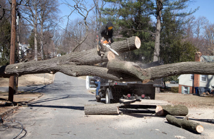Residential Tree Services-Weston FL Tree Trimming and Stump Grinding Services-We Offer Tree Trimming Services, Tree Removal, Tree Pruning, Tree Cutting, Residential and Commercial Tree Trimming Services, Storm Damage, Emergency Tree Removal, Land Clearing, Tree Companies, Tree Care Service, Stump Grinding, and we're the Best Tree Trimming Company Near You Guaranteed!