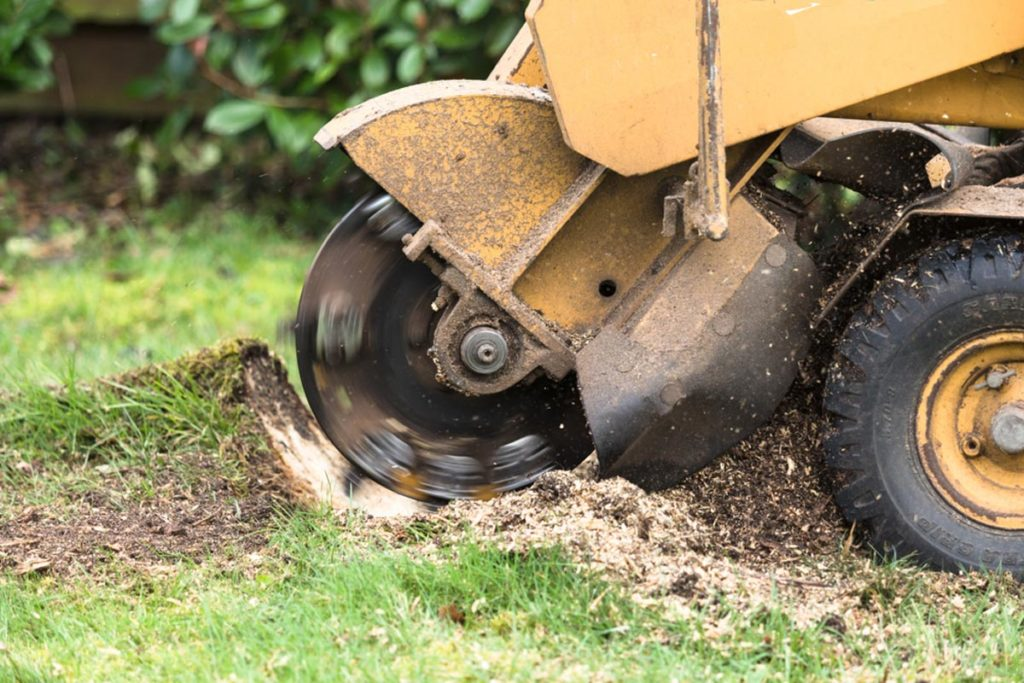 Stump Grinding-Weston FL Tree Trimming and Stump Grinding Services-We Offer Tree Trimming Services, Tree Removal, Tree Pruning, Tree Cutting, Residential and Commercial Tree Trimming Services, Storm Damage, Emergency Tree Removal, Land Clearing, Tree Companies, Tree Care Service, Stump Grinding, and we're the Best Tree Trimming Company Near You Guaranteed!