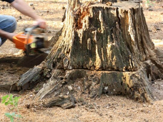 Stump Removal-Weston FL Tree Trimming and Stump Grinding Services-We Offer Tree Trimming Services, Tree Removal, Tree Pruning, Tree Cutting, Residential and Commercial Tree Trimming Services, Storm Damage, Emergency Tree Removal, Land Clearing, Tree Companies, Tree Care Service, Stump Grinding, and we're the Best Tree Trimming Company Near You Guaranteed!