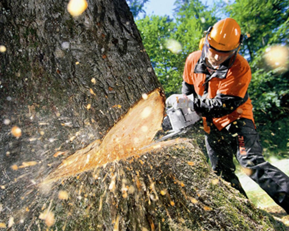 Tree Cutting-Weston FL Tree Trimming and Stump Grinding Services-We Offer Tree Trimming Services, Tree Removal, Tree Pruning, Tree Cutting, Residential and Commercial Tree Trimming Services, Storm Damage, Emergency Tree Removal, Land Clearing, Tree Companies, Tree Care Service, Stump Grinding, and we're the Best Tree Trimming Company Near You Guaranteed!