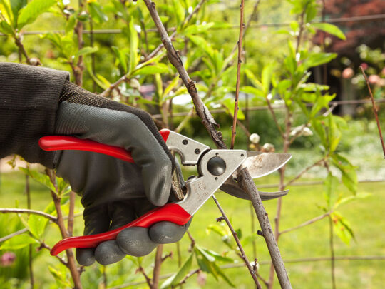 Tree Pruning-Weston FL Tree Trimming and Stump Grinding Services-We Offer Tree Trimming Services, Tree Removal, Tree Pruning, Tree Cutting, Residential and Commercial Tree Trimming Services, Storm Damage, Emergency Tree Removal, Land Clearing, Tree Companies, Tree Care Service, Stump Grinding, and we're the Best Tree Trimming Company Near You Guaranteed!