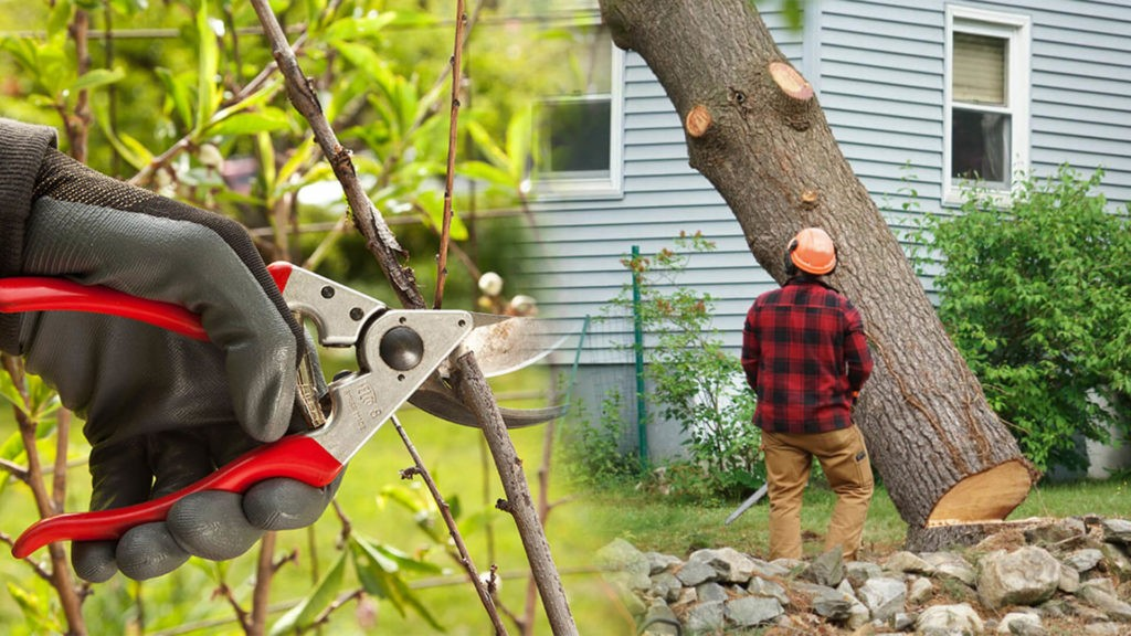 Tree pruning & tree removal-Weston FL Tree Trimming and Stump Grinding Services-We Offer Tree Trimming Services, Tree Removal, Tree Pruning, Tree Cutting, Residential and Commercial Tree Trimming Services, Storm Damage, Emergency Tree Removal, Land Clearing, Tree Companies, Tree Care Service, Stump Grinding, and we're the Best Tree Trimming Company Near You Guaranteed!